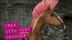 Image of horse with to highlight occasional test offers